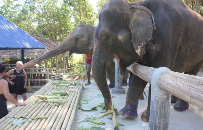 Phuket Elephant Camp